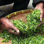 kobieta miesza rękami zieloną herbatę znajdującą się na tacy bambusowej