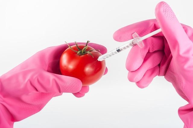 pomidor jest trzymany w różowych rękawiczkach, w którego jest wstrzykiwana substancja chemiczna