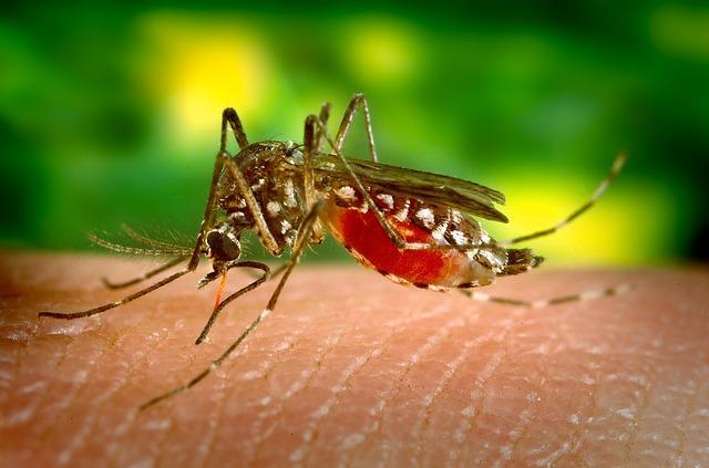 Jak się chronić przed komarami
