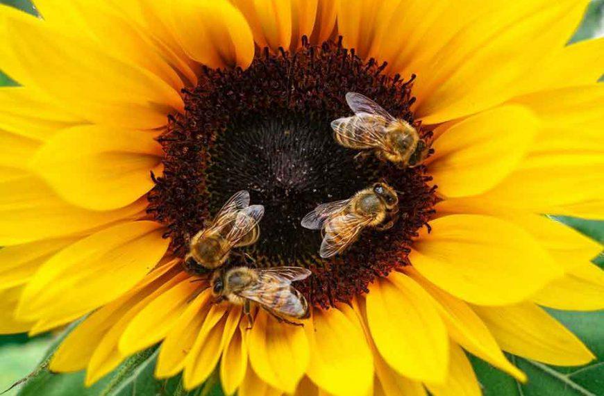 Dlaczego należy chronić pszczoły