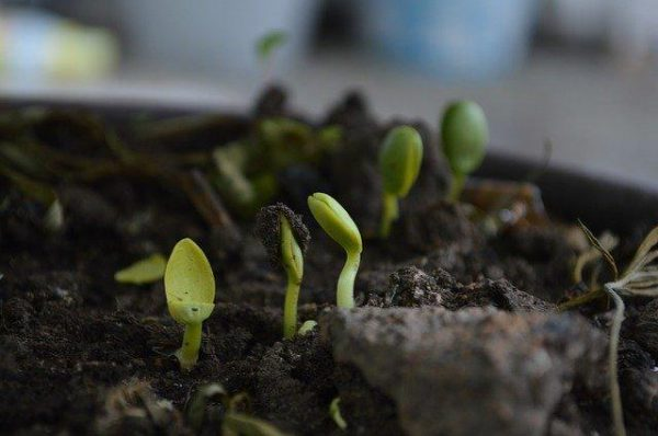 nasiona wykielkowały z naturalnego nawozu