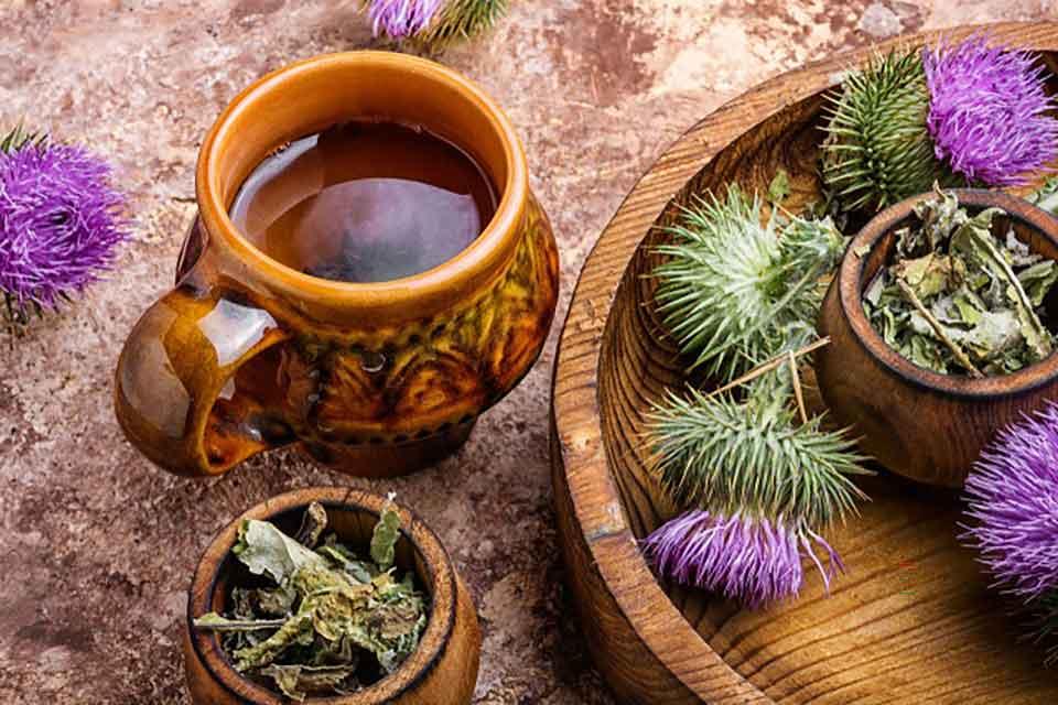 Ostropest plamisty jest ziołem, które wspomaga regenerację i pracę wątroby