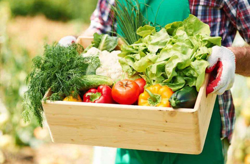 Dlaczego warto udawać się do sklepu z ekologiczną żywnością?